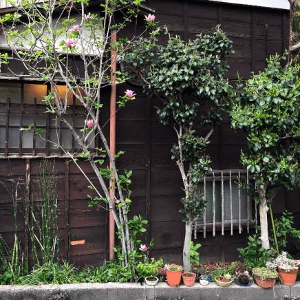 Omotesando streets near Harajuku
